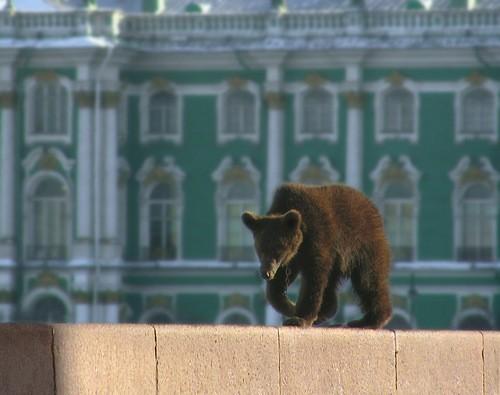 Медведь на улицу