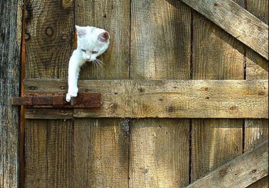 Интересное о кошках - 2