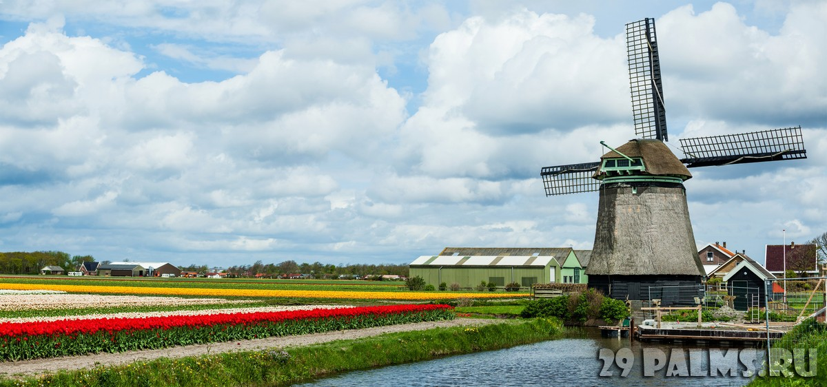 Нидерланды, Голландия. Ducht landscape with windmill and colorful tulip field in Holland. Фото mac_sim - Depositphotos