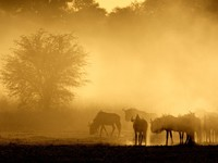 Blue wildebeest (Connochaetes taurinus) in dust at sunrise, Kalahari desert, South Africa. Фото Nico Smit  Depositphotos