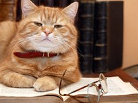 Кошки. Scientist Cat. Фото Konstantin Kirillov - Depositphotos