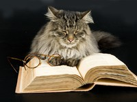 Кошки. Cat, Book and Glasses. Фото Андрей Скат - Depositphotos