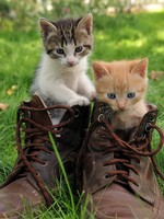 Новый домик. Pair of kittens in high shoes outdoor. Фото kalinovsky - Depositphotos