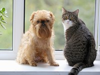 Кошки и собаки. Striped, gray cat and dog sitting on the window. Фото Okssi68 - Depositphotos