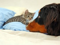 Кошки и собаки. Dog and kitten. Фото Photocreo - Depositphotos