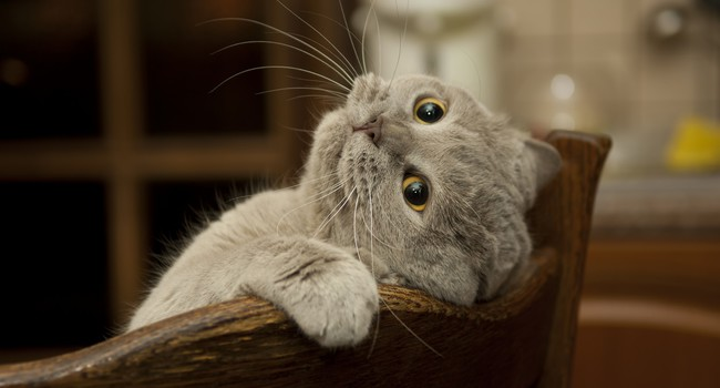 Блог Павла Аксенова. Фото дня. Что у кошки на душе. Фото sti1999 - Depositphotos
