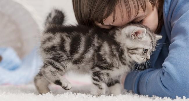 Блог Павла Аксенова. Фото дня. Что у кошки на душе. Фото idal - Depositphotos