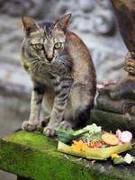 Блог Павла Аксенова. Фото дня. Что у кошки на душе. Фото Tatiana Morozova - Depositphotos