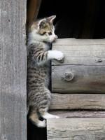 Блог Павла Аксенова. Фото дня. Что у кошки на душе. Фото Boris Jaroscak - Depositphotos