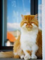 Блог Павла Аксенова. Фото дня. Что у кошки на душе. Фото miolana - Depositphotos