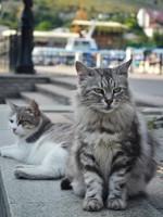 Блог Павла Аксенова. Фото дня. Что у кошки на душе. Фото natamc - Depositphotos