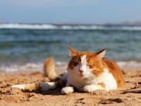 Блог Павла Аксенова. Фото дня. Что у кошки на душе. Фото Eduard Kraft - Depositphotos