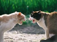 Блог Павла Аксенова. Фото дня. Что у кошки на душе. Фото Alexust - Depositphotos