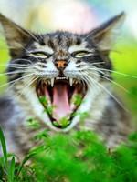 Блог Павла Аксенова. Фото дня. Что у кошки на душе. Фото BestPhotoStudio - Depositphotos