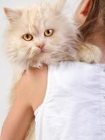 Блог Павла Аксенова. Фото дня. Что у кошки на душе. Фото Cherry-Merry - Depositphotos