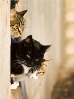 Блог Павла Аксенова. Фото дня. Что у кошки на душе. Фото S_Razvodovskij - Depositphotos