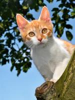 Блог Павла Аксенова. Фото дня. Что у кошки на душе. Фото vencav - Depositphotos