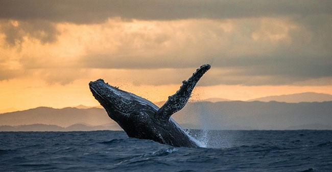 Морские гиганты нашей планеты
