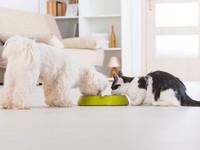 Блог Павла Аксенова. Как кошка с собакой. Фото Amaviael - Depositphotos