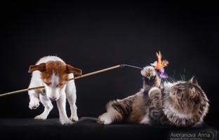 Блог Павла Аксенова. Как кошка с собакой.  Фото Анны Аверьяновой