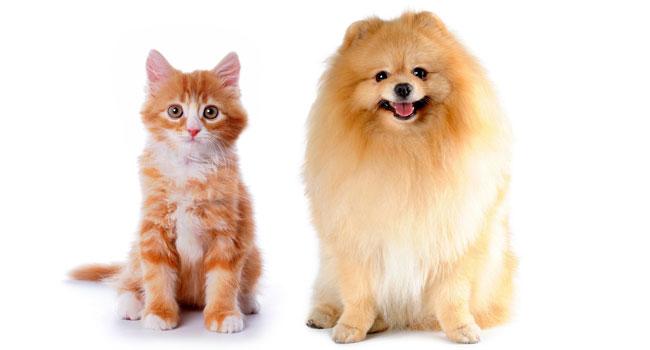 Блог Павла Аксенова. Как кошка с собакой. Фото grase - Depositphotos