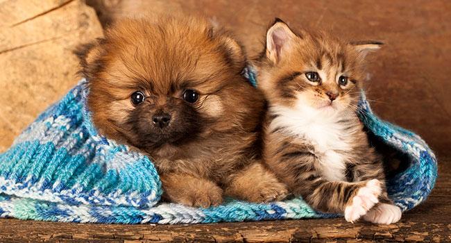 Блог Павла Аксенова. Как кошка с собакой. Фото Lilun_Li - Depositphotos