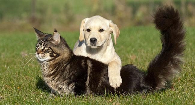 Блог Павла Аксенова. Как кошка с собакой. Фото okeanas - Depositphotos