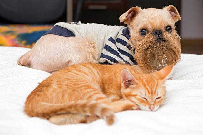 Блог Павла Аксенова. Как кошка с собакой. Фото Okssi68 - Depositphotos