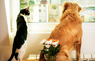Блог Павла Аксенова. Как кошка с собакой. Фото grki - Depositphotos