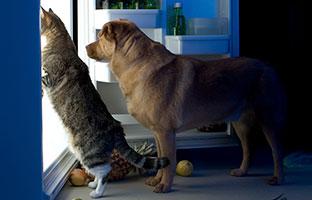 Блог Павла Аксенова. Как кошка с собакой. Фото websubstance - Depositphotos