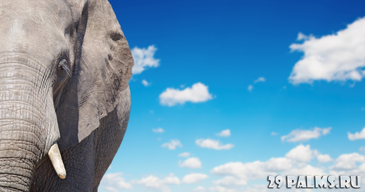 В мире животных: путешествие в Танзанию   Путешествия на ...