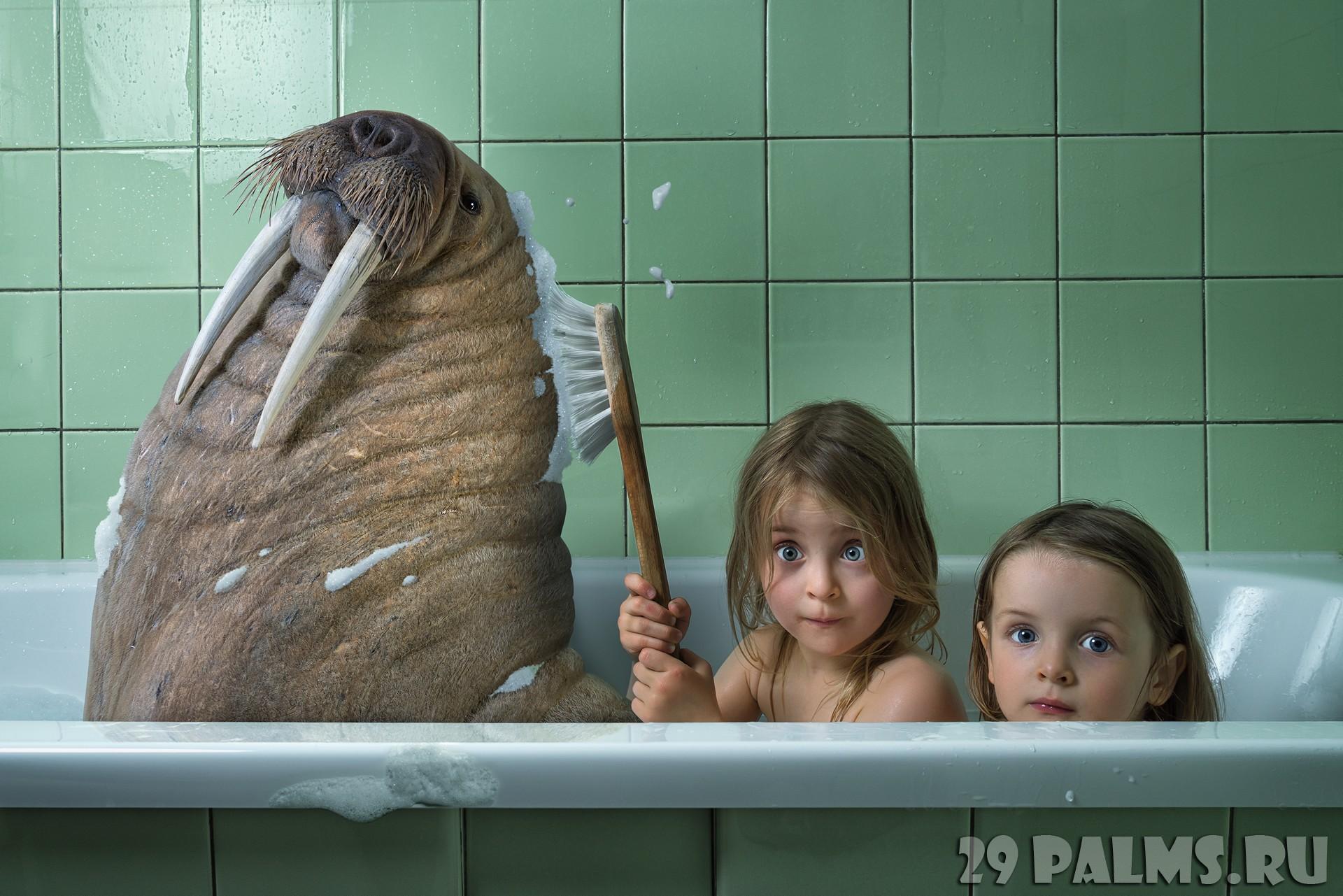 Хер моржовый фото 1 фотография