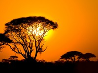 Блог Павла Аксенова. Кения. African sunset in savannah, kenya. Фото javarman - Depositphotos