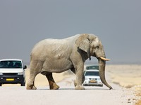 Блог Павла Аксенова. Кения. Elephant crossing road. Фото  JohanSwanepoel - Depositphotos