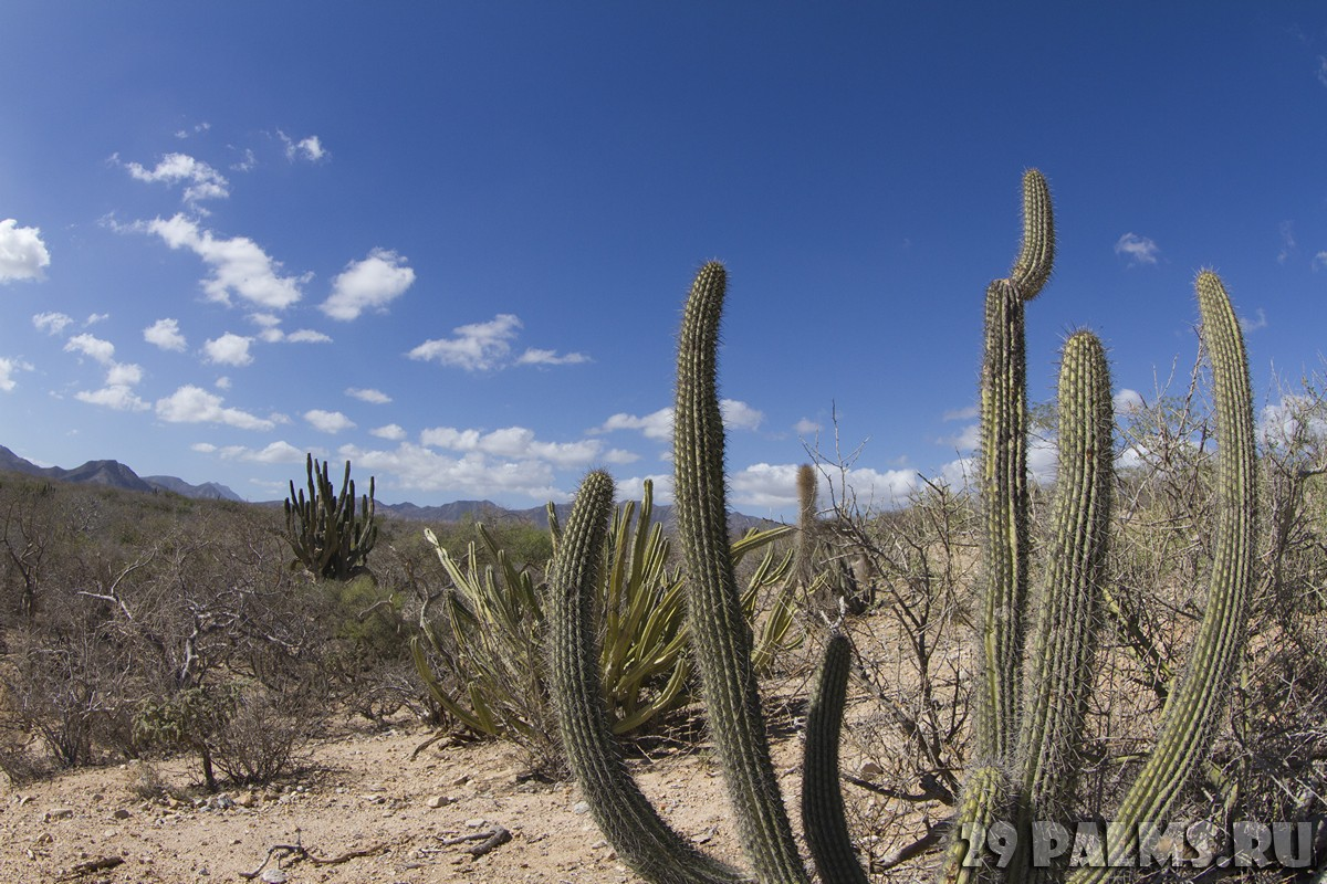 Мексика. Beautiful desert landscape of Baja California Sur, Mexico. Фото dubassy - Depositphotos