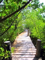 Мексика. Mangrove forest walkway jungle mexico. Фото lunamarina - Depositphotos