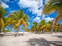 Мексика. Palm grove on the sandy tropical beach at exotic country. Фото d.travnikov - Depositphotos