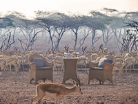 Блог Павла Аксенова. ОАЭ. Абу-Даби. О. Сир-Бани-Яс. Sir Bani Yas. Breakfast with gazelles