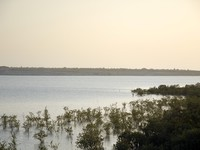 Блог Павла Аксенова. ОАЭ. Абу-Даби. О. Сир-Бани-Яс. Sir Bani Yas. Mangroves