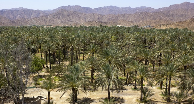 Клуб путешествий Павла Аксенова. ОАЭ. Эмират Фуджейра. Palm oasis in the hot desert. Фото pepj - Depositphotos