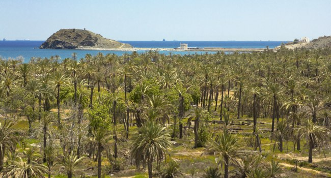 Клуб путешествий Павла Аксенова. ОАЭ. Эмират Фуджейра. Palm trees with the sea behind in Fujairah. Фото  pepj -  Depositphotos