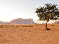 Иордания. Lonely tree in Wadi Rum (Jordan). Фото naticastillog - Depositphotos