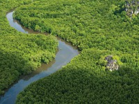 Клуб путешествий Павла Аксенова. Малайзия. О.Лангкави. Aerial View - Mangroves