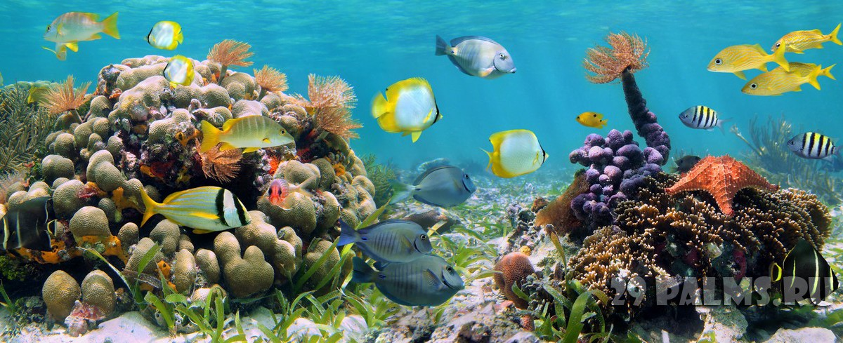 Underwater panorama in a coral reef with colorful sealife. Фото vilainecrevette - Depositphotos