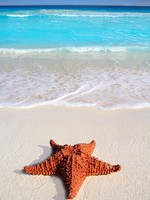 Caribbean starfish tropical sand turquoise beach. Фото TONO BALAGUER SL - Depositphotos