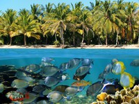 Tropical beach with coconuts trees and an underwater coral reef with colorful fish, Caribbean. Фото vilainecrevette - Depositphotos
