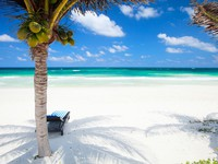 Coconut palms at perfect Caribbean beach in Tulum Mexico. Фото shalamov - Depositphotos