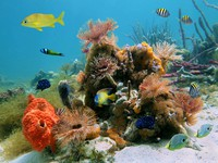 Underwater scene with colorful tropical sealife in a coral reef. Фото vilainecrevette - Depositphotos