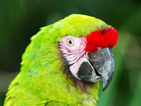 Green parrot from Mexico. Фото Anton Ivanov - Depositphotos
