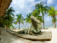Iguana on The Caribbean Beach. Mexico. Фото Anna Subbotina - Depositphotos